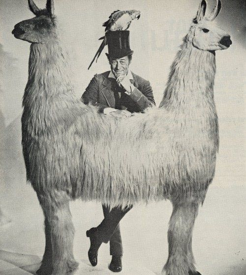 Llama with 2 heads facing opposite directions
